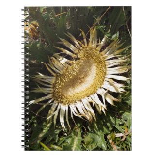 Carlineアザミ(Carlinaのacanthifolia) ノートブック