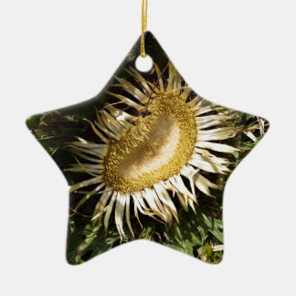Carlineアザミ(Carlinaのacanthifolia) 陶器製星型オーナメント