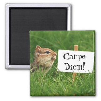 Carpe Diemのシマリスの磁石 マグネット