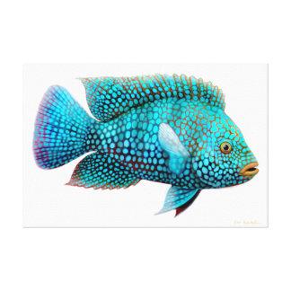 Carpintisテキサス州のシクリッド魚のキャンバスプリント キャンバスプリント