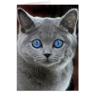 CAT カード