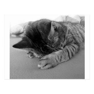 cat-98360.jpg ポストカード