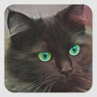 Cat Green Eyes スクエアシール
