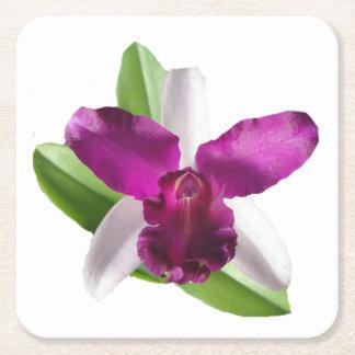 Cattleyaの蘭の花 スクエアペーパーコースター