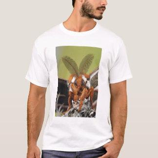 Cecropiaガ、Hyalophoraのcecropia、大人 Tシャツ