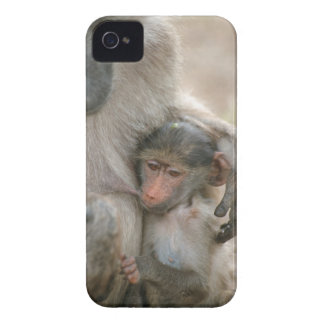 Chacmaヒヒ、若者、KrugerとのPapioのursinus Case-Mate iPhone 4 ケース