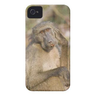 Chacmaヒヒ(Papioのursinus)の負傷 Case-Mate iPhone 4 ケース