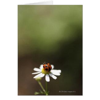 Chamomileの花のてんとう虫 カード