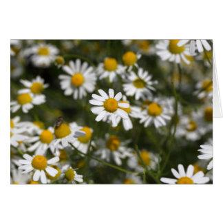 Chamomileの花 カード