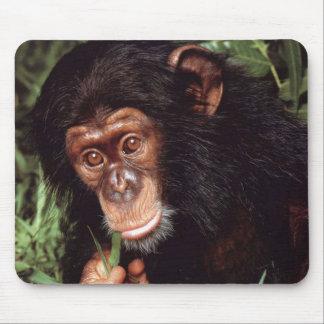 Chimpansee マウスパッド