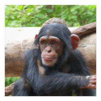 Chimpanzee_2015_0504 フォトプリント