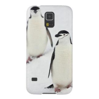 ChinstrapのペンギンのPygoscelisのantarcticus)、 Galaxy S5 ケース