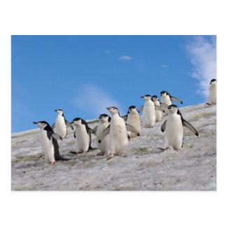 chinstrapのペンギン、Pygoscelis南極大陸、 ポストカード