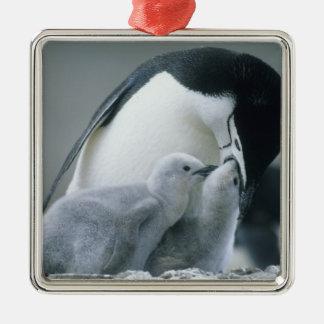 Chinstrapのペンギン、Pygoscelis南極大陸)、 メタルオーナメント