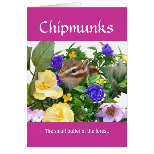 Chipmunk and flower (pohto) type-1 カード