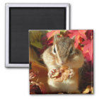 Chipmunk , Autumn (9) photo マグネット