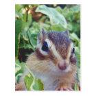 chipmunk , customizable ポストカード