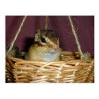 chipmunk in the basket 1 ポストカード