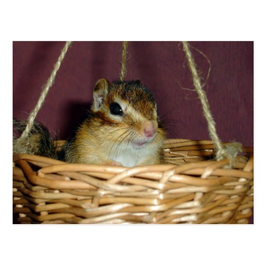 chipmunk in the basket 1 ポストカード