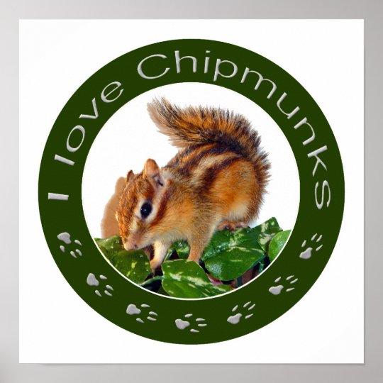 Chipmunk photo ポスター
