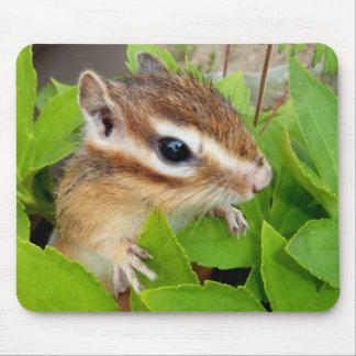 Chipmunk photo (20-1) マウスパッド