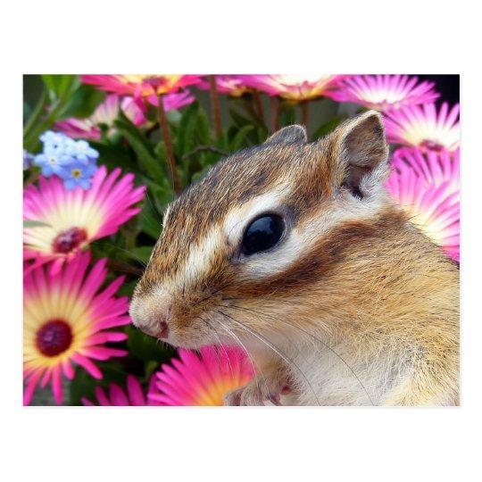 Chipmunk photo (30-13) ポストカード