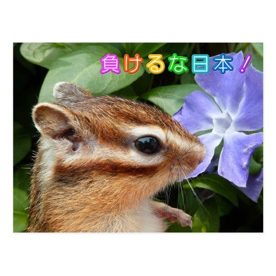 Chipmunk , Support JAPAN ポストカード