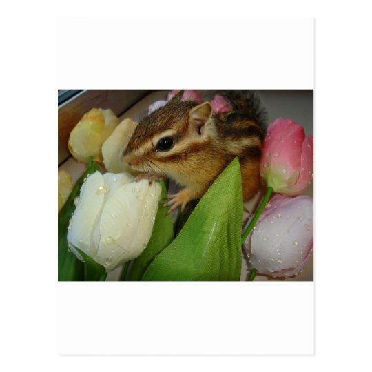 chipmunk & tulip ポストカード