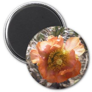 Chollaのモモの開花の磁石 マグネット