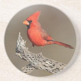 chollaの肋骨の(鳥)ショウジョウコウカンチョウ コースター