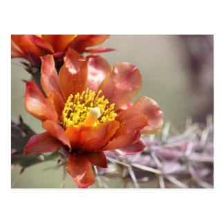 Chollaの開花の郵便はがき ポストカード