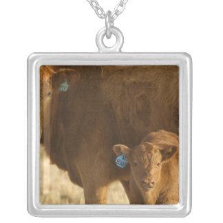 Choteau、モンタナの近くの子牛を持つ雑種牛、 シルバープレートネックレス