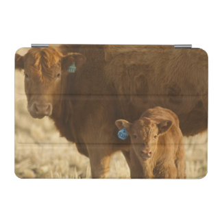 Choteau、モンタナの近くの子牛を持つ雑種牛、 iPad Miniカバー