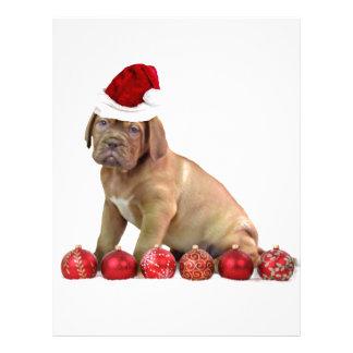 Christas Dogue de Bordeauxの子犬 レターヘッド