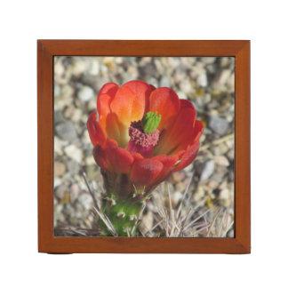 Claretコップのハリネズミサボテンの開花 ペンスタンド