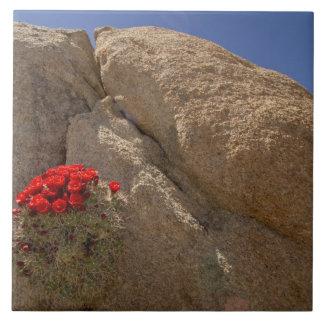 Claretコップまたは開花のモハーベの小山のサボテン タイル