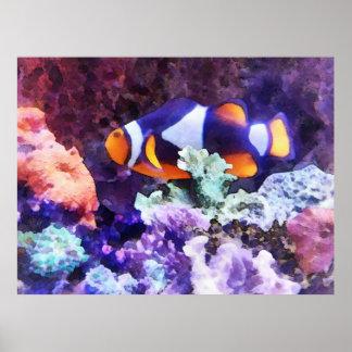 Clownfishおよび珊瑚 ポスター