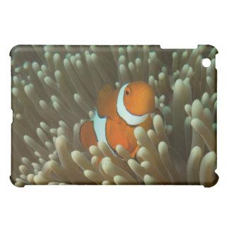 Clownfishかわいいグレート・バリア・リーフの珊瑚海 iPad Mini Case