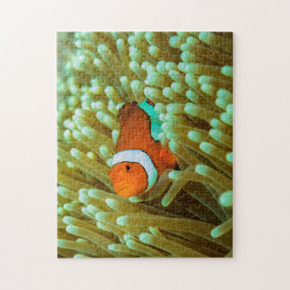 Clownfishのかわいいジグソーパズル ジグソーパズル