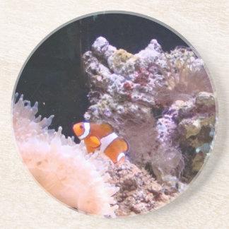 Clownfishのコースター コースター