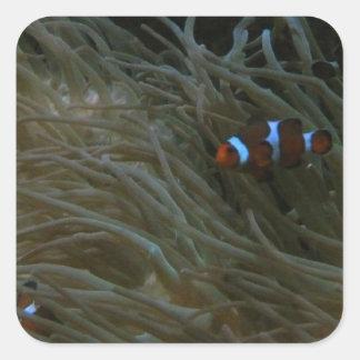 clownfish スクエアシール