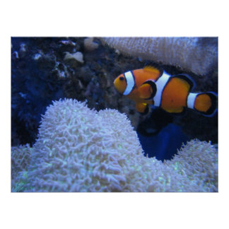 Clownfish ポスター