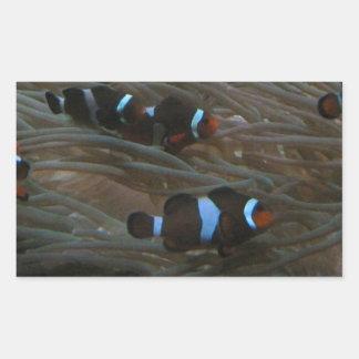 clownfish 長方形シール