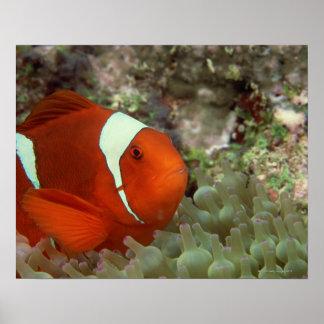 Clownfish 2 ポスター