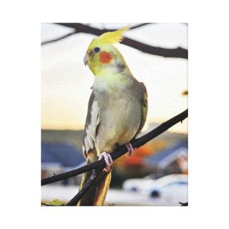 Cockatielのプロフィールの写真 キャンバスプリント