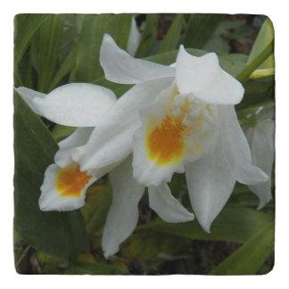 Coelogyneの蘭の花柄の石 トリベット