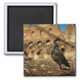 Colosseum Matnetのハト マグネット