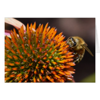 Coneflowerの挨拶状の蜂蜜の蜂 カード