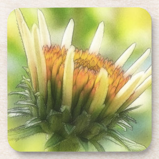 Coneflowerの芽 コースター
