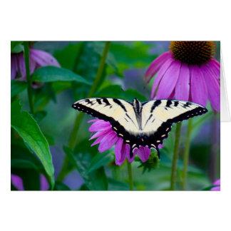 Coneflowerの蝶 カード
